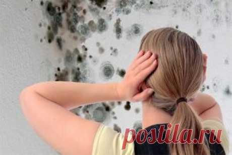 Плесень опасный для здоровья грибок, особенно если она завелась в доме. Как избавиться от плесени дома используя подручные средства, которые точно у вас есть. | Женский сайт - leeleo.ru