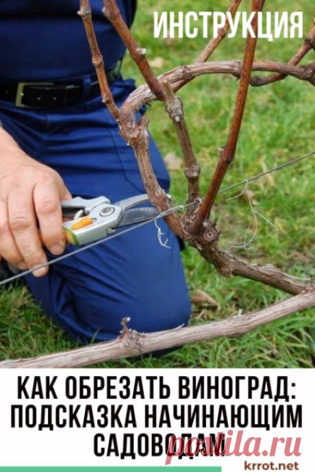 Как Обрезать Виноград: Инструкция для Начинающих | (Видео) #сад #урожай #виноград
