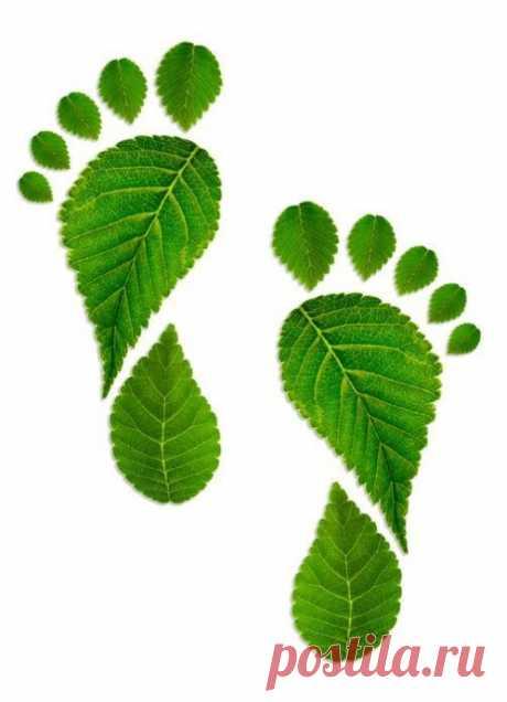 Поделки из осенних листьев — Поделки с детьми
