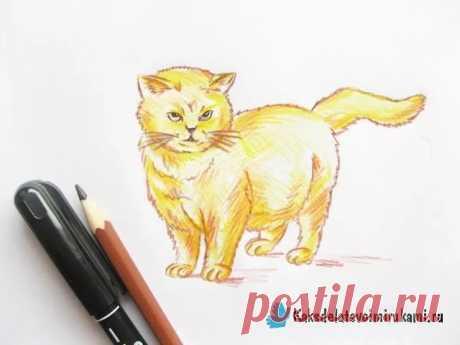 «Как нарисовать кошку цветными карандашами: поэтапный мастер-» — карточка пользователя slavashishaev в Яндекс.Коллекциях