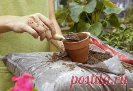 Удобрение комнатных растений — Полезные советы