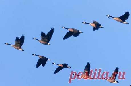 Картинки птицы улетают на юг (35 фото) ⭐ Забавник
