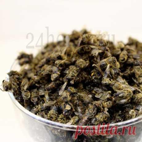 Подмор пчелиный – лекарь сильный