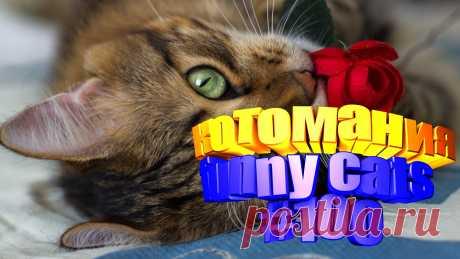 Любите смотреть смешные видео про котов? Тогда мы уверены, Вам понравится наше видео 😍. Также на котомании Вас ждут: видео кот,видео кота,видео коте,видео котов,видео кошек,видео кошка,видео кошки,видео о котах, видео про, видео с кошками, кот видео, кошачьи приколы, кошек смешные, кошки 2020, приколы про животных до слез, про кошек смешное, ролики про котов, смешное котики, смешной кот, смешные коты