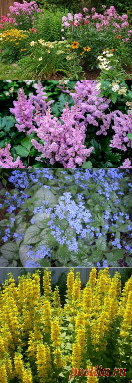 Какие многолетние цветы сажают и пересаживают осенью - Все обо Всем