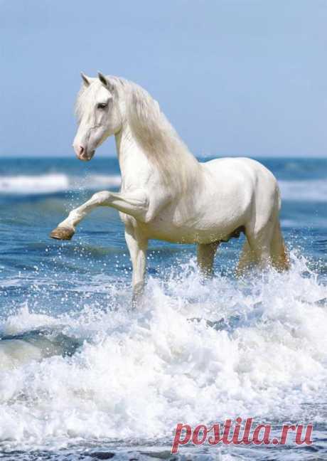 Лошадь белая на траве  Далеко ушла в поле  Дома упряжь вся в серебре  А ей нужно лишь воли.  Борис Гребенщиков
