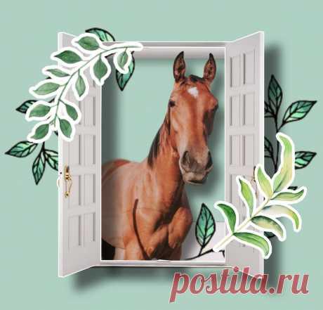 Как правильно: «лошадЬми» или «лошадЯми», «дверЬми» или «дверЯми»? Запоминаем легко и быстро | Беречь речь | Яндекс Дзен