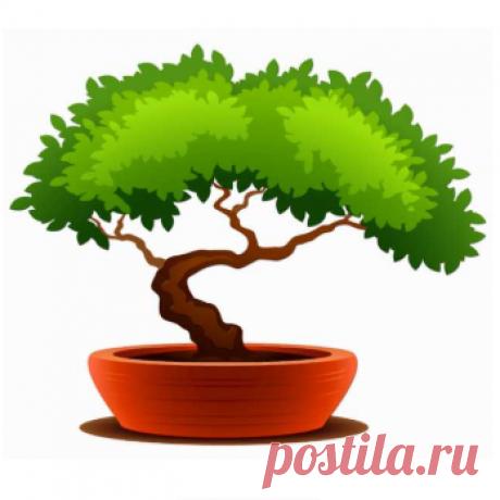 Купить бонсай - Карликовое дерево в Челябинске — объявление № Т-26915158 на Барахла.НЕТ