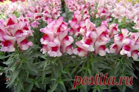 18 consejos sobre la cultivación de las plantas de flores