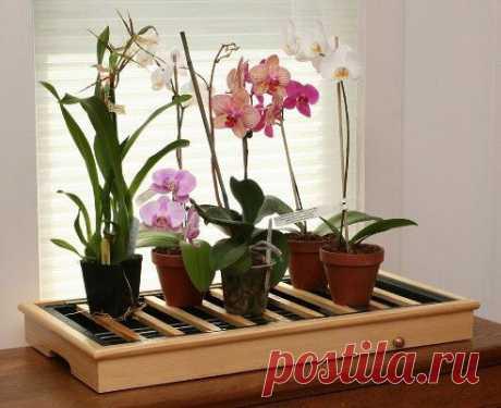Как правильно ухаживать за требовательной орхидеей?.
