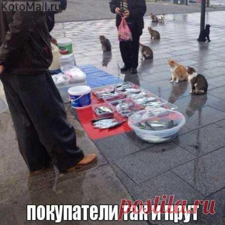 Строим забор...   KotoMail.ru