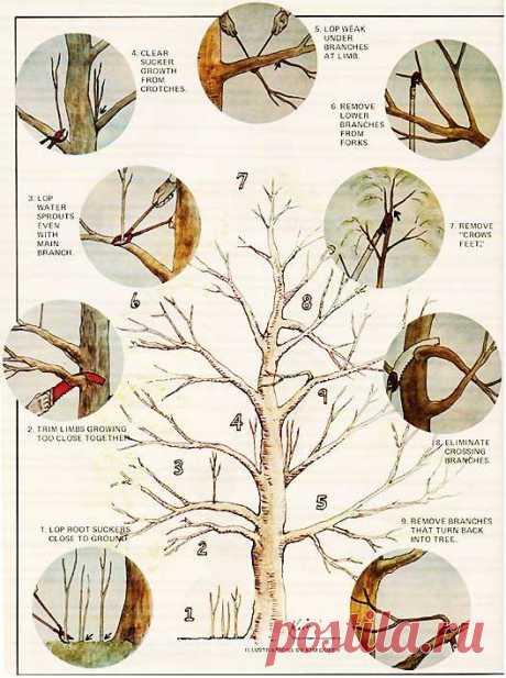 Как Сократить яблоней - Органическое садоводство - Mother Earth НОВОСТИ