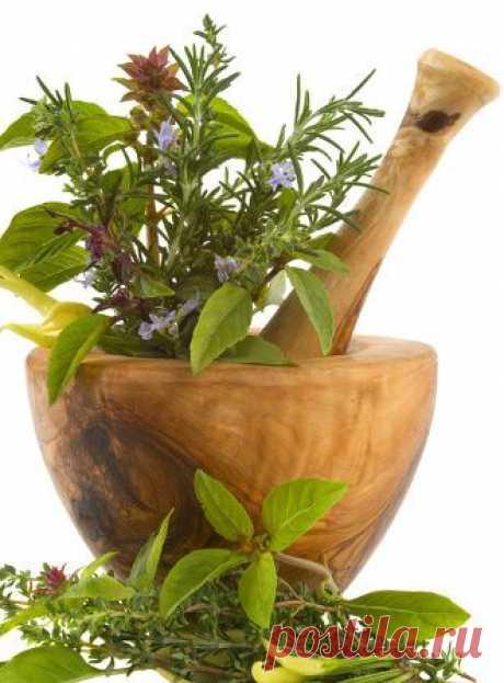 Чтоб травы лекарственные, которые собираешь, силу отдали. | Советы Народной Мудрости