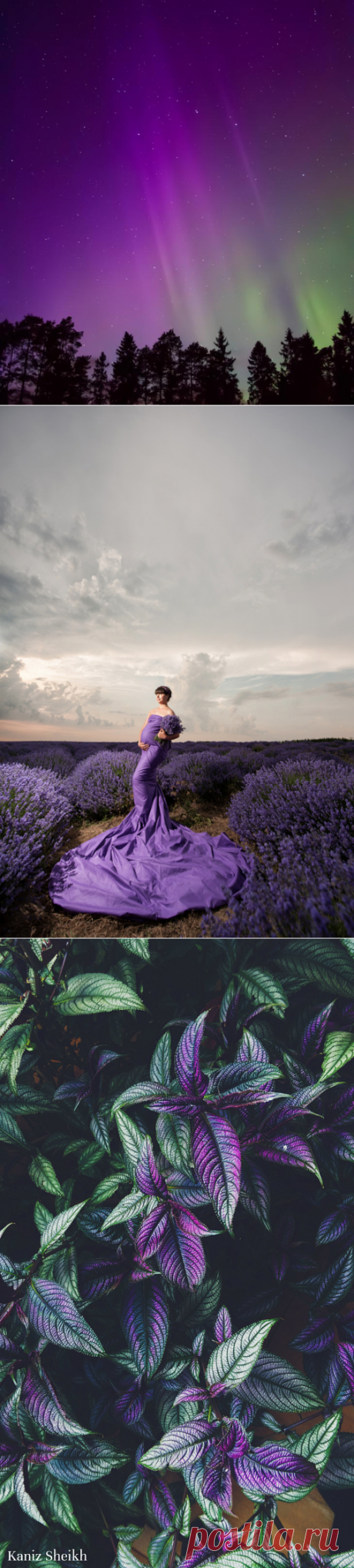 Фотографии с фиолетовым настроением