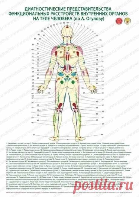 Плакат диагностические представительства внутренних органов на теле человека сзади по А. Огулову