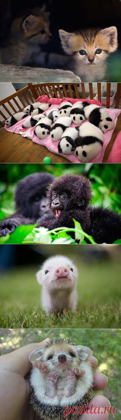 Малыши — карандаши. Лучшие фотки за 2012 год.