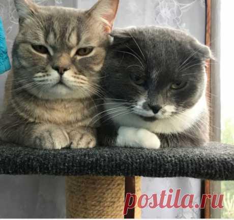 Эмоциональные животные / Питомцы