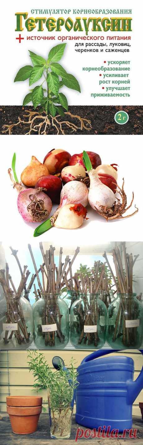 """""""Волшебный гормон роста"""" - гетероауксин.  Гетероауксин (индолилуксусная кислота) – это удобрение из группы ауксинов, т.е. органических стимуляторов роста растений. Широко используется для стимулирования корнеобразования саженцев и черенков плодово-ягодных культур, декоративных деревьев,  кустарников, а также для обработки семян, корней рассады, луковиц и клубнелуковиц. У всех растений, обработанных этим великолепным стимулятором роста, имеется здоровая корневая система"""