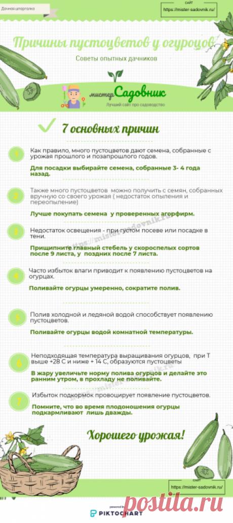 Пустоцветы у огурцов - основные причины появления