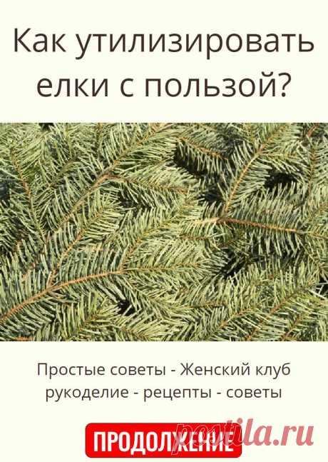 Как утилизировать елки с пользой?