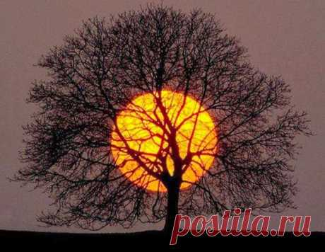 """вАлмазе RU - арт.26372 Алмазная мозаика """"Дерево на закате"""" [размер 40*30 см.] - 1870 руб. - под заказ"""