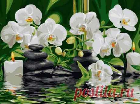 Орхидеи ex5261. Наборы для раскрашивания > Цветной > Цветы.