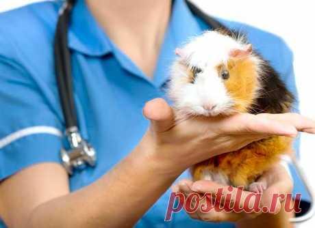 """Власникам тварин - Ветеринарний кардіологічний консультаційний центр"""""""