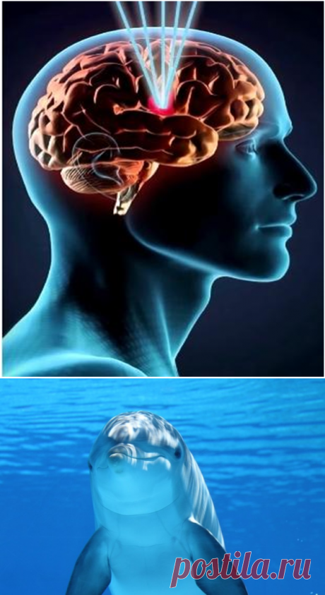 Не в интеллекте дело. Ученые обнаружили неожиданное предназначение мозга