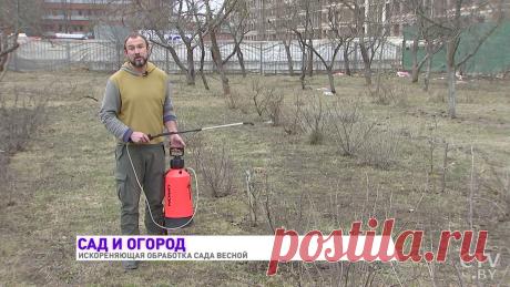 Новости: Чем обрабатывать деревья и растения весной? Самое эффективное средство от Ивана Русских