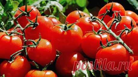 Кому нельзя есть помидоры - Медицина 2.0
