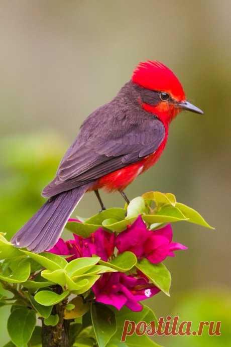Source: flying of birds
