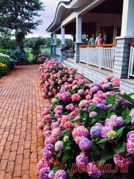 Как правильно посадить и вырастить гортензию в саду или на даче — Садоводка
