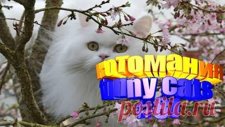 коты смешные видео, видео котов смешные, коты смешное видео, смешное видео котов, видео коты приколы, видео про котов, видео котов, кот видео, видео кота, видео животные смешные, животные смешное видео, смешное видео животные, смешно животные, животные смешное, коте видео, прикол с котами, приколы котами, смешные кошки, кошки видео смешные, смешная кошка, смешные про кошек, про кошек смешных, кошка смешное видео, кошка смешная видео, про смешно кошек, смешные кошка, видео про кошек