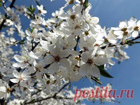 Весна в расцвете!!!!!!