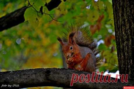 Фото: Маленький позитив. Фотолюбитель---путешественник Оля (Олик). Фото животных - Фотосайт Расфокус.ру