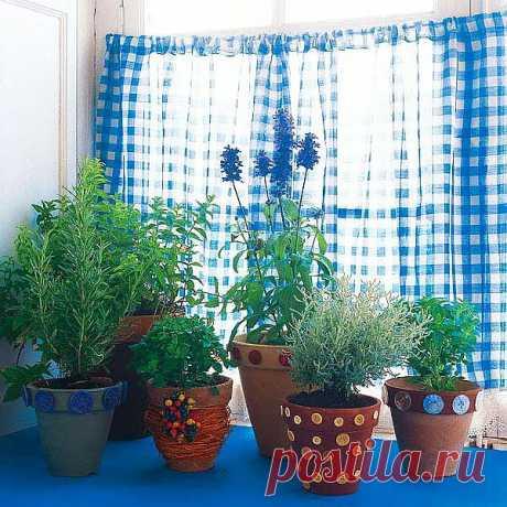 Оригинальные идеи для комнатных растений.