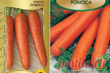 Морковь Ромоса: отзывы, характеристика и урожайность сорта, фото, описание, достоинства и недостатки, особенности выращивания