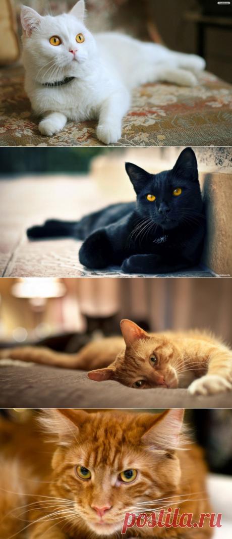 Как окрас кошки влияет на ее характер? » RadioNetPlus.ru