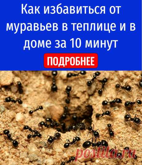 Как избавиться от муравьев в теплице и в доме за 10 минут