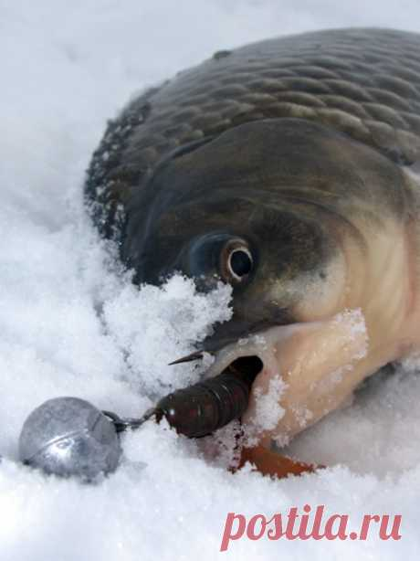 Уловистая тактика прикармливания зимнего карася   Мастер-Фишер