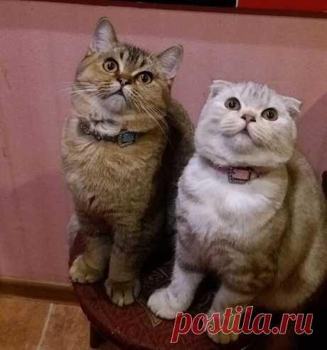 Как правильно познакомить кошек   Дневник кошатницы   Яндекс Дзен