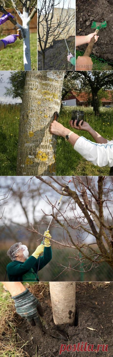 Обработка сада осенью – эффективные приемы против болезней и вредителей