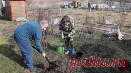 Костры, шашлыки, змеи. 10 вещей, за которые могут оштрафовать на даче - Новости Mail.ru