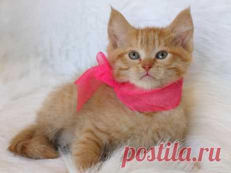 Что нужно знать, прежде чем завести кота? | nashi-pitomcy.ru