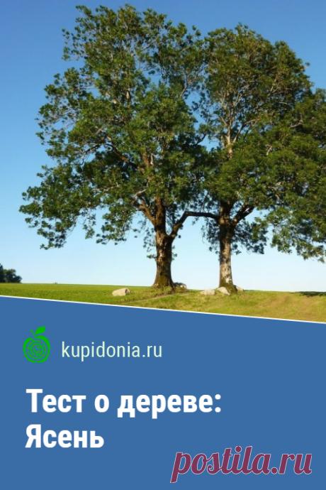 Тест о дереве: Ясень. Интересный тест об ясене из серии тестов о деревьях. Проверьте свои знания!