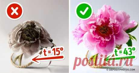 10способов сохранить цветы ввазе свежими надолго Мой букет поэтой инструкции уже 2недели стоит.