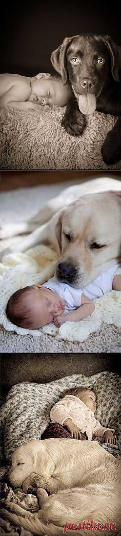 Доза умиления в фото: собаки-хранители