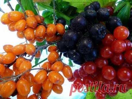 Как поддерживать давление в норме с помощью овощей и ягод — Огород без хлопот