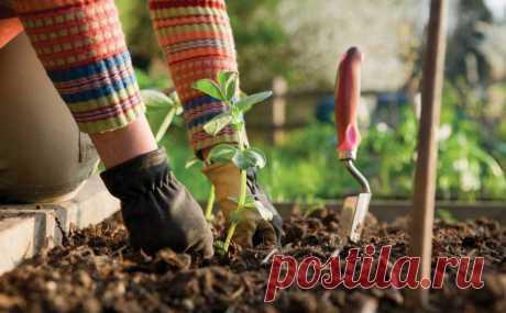 """Вытяжка из золы - уникальное природное удобрение   Журнал """"MY HOME LIFE"""" Древесная зола это прекрасное удобрение, содержащее калий, фосфор, железо, бор. А еще марганец, цинк, серу, молибден и пару десятков прочих полезных для растений микроэлементов. Так что зола – рекордсмен среди удобрений по содержанию микроэлементов. И отличный раскислитель почв, поскольку содержит известь и мел."""