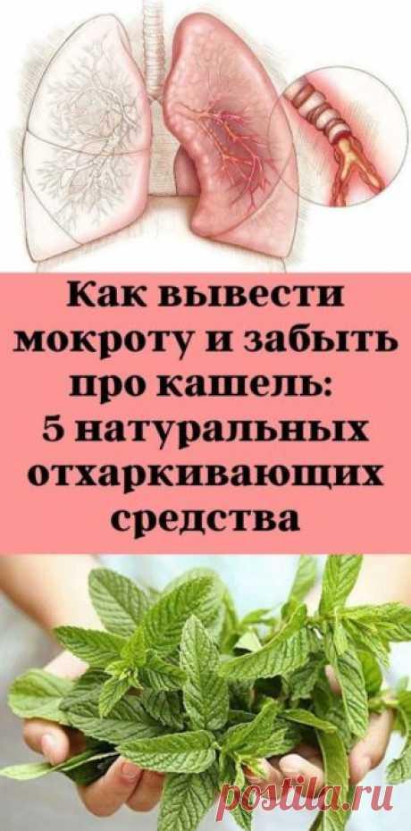 Как вывести мокроту и забыть про кашель: 5 натуральных отхаркивающих средства - be1issimo.ru